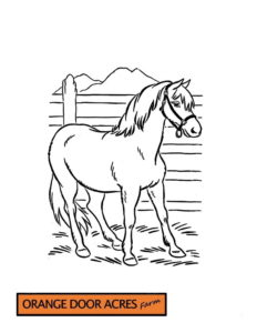 Colouring Page – 6